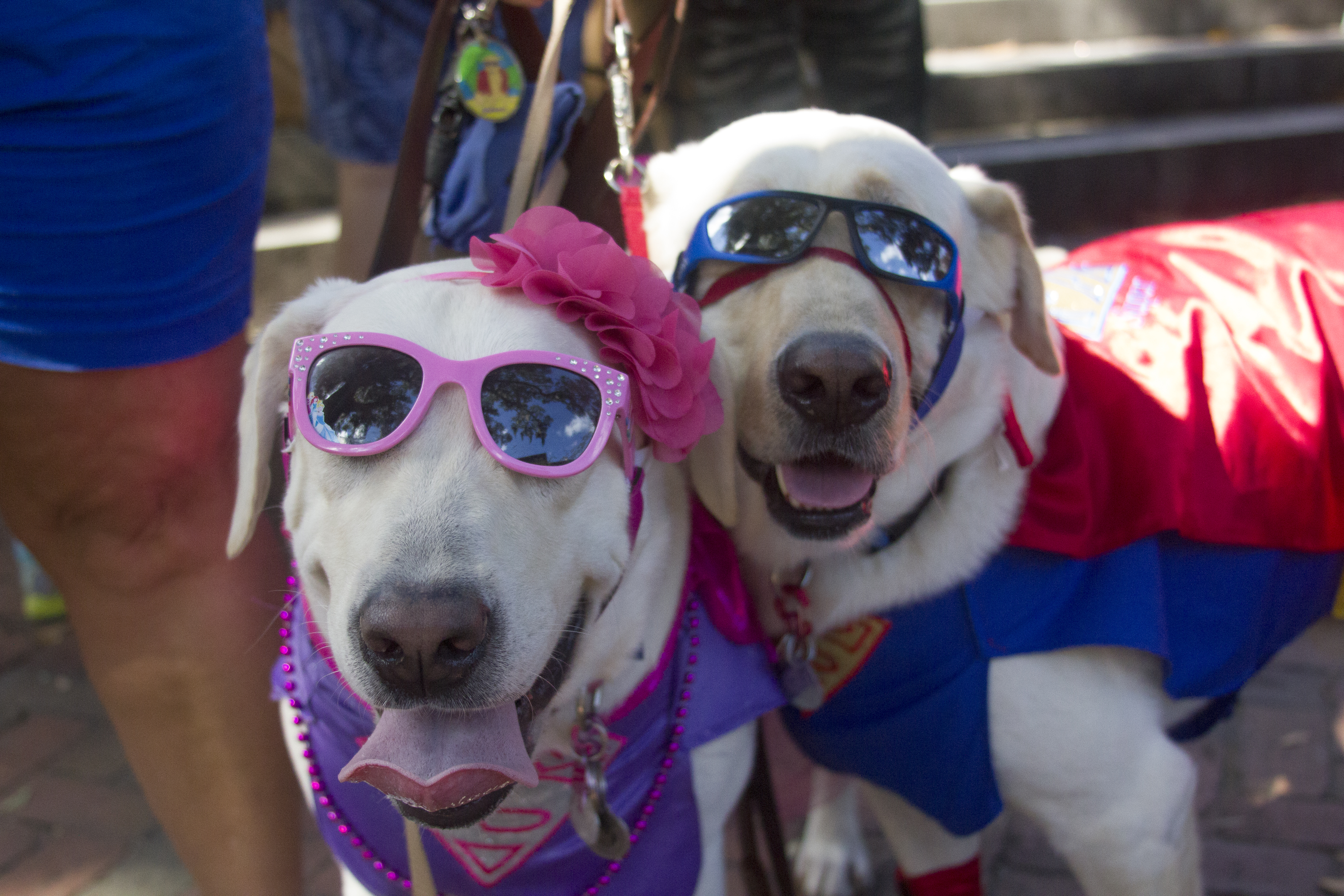 dogs trick or treat for wag o ween photo essay scad district