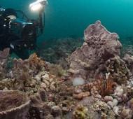 diver_video_reef